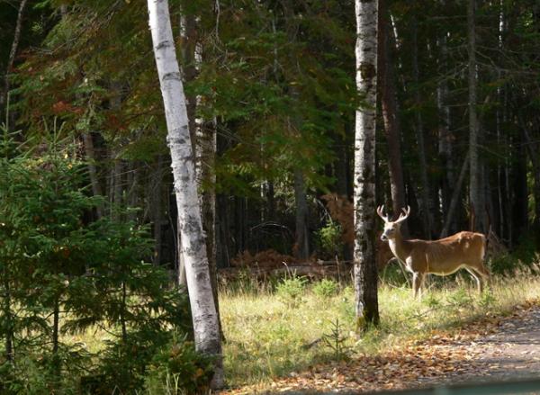 Rencontre dans une forêt québécoise