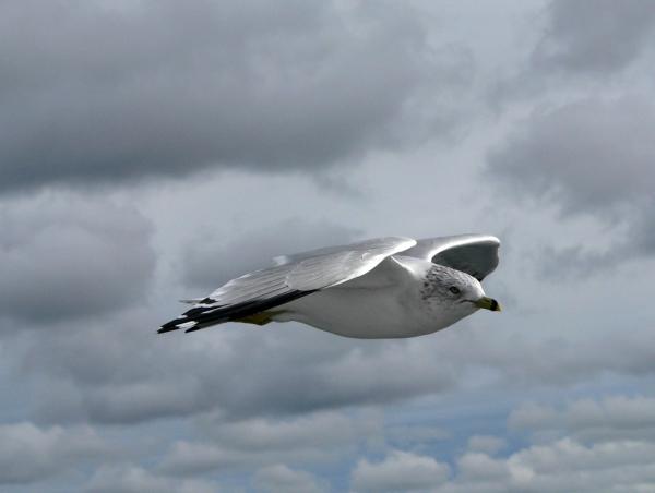 Vol au-dessus du Québec