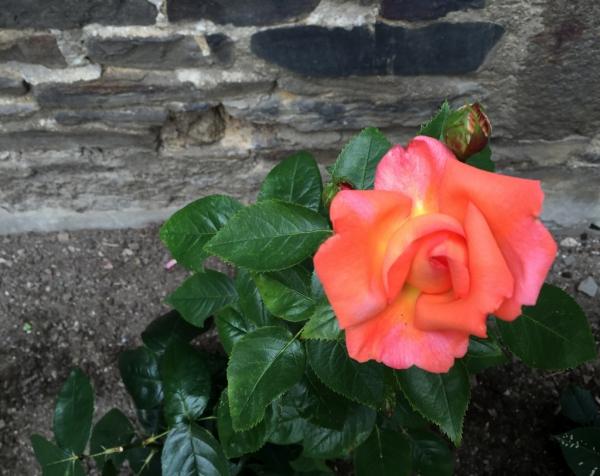 Ce matin dans mon jardin