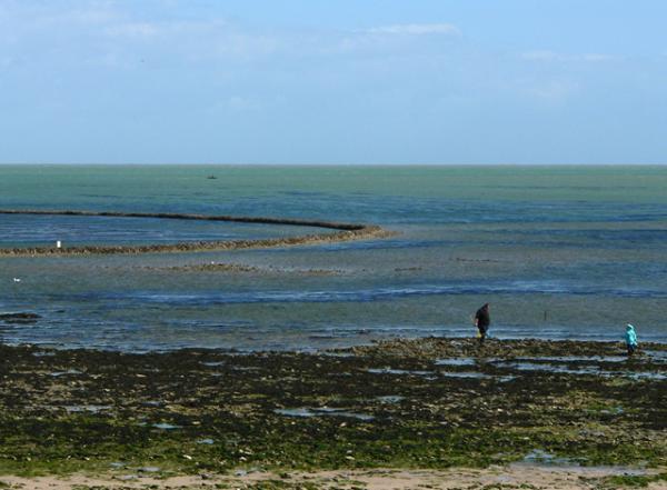 Une écluse à poissons sur l'île de Ré