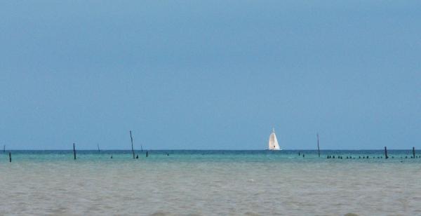 Au large du Vivier sur mer, au cœur de la Baie du Mt-St-Michel