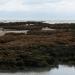 Le banc des hermelles dans la Baie du Mt-St-Michel