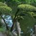 Dans le parc oriental de Maulévrier