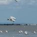 Vol au-dessus de la Baie du MtSt-Michel