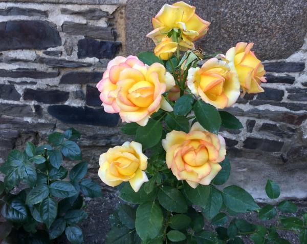 Dans mon jardin, avant l'orage!