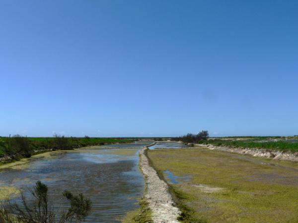 Marais salants- île de Ré