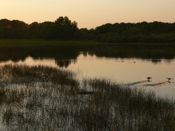 Lumières du soir sur l'étang