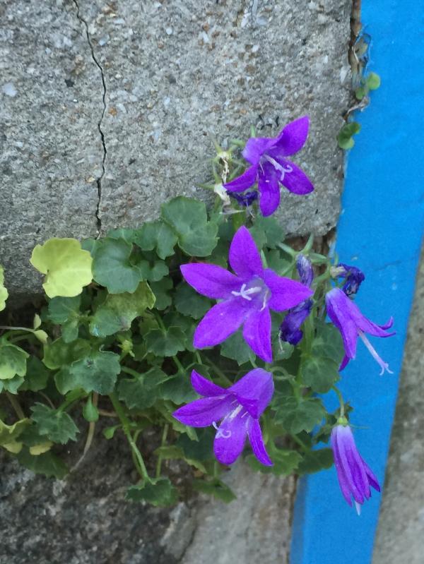 Aujourd'hui sur un mur: le printemps en automne!