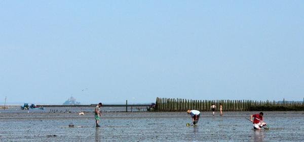 Pêche à pied dans la Baie du Mt-St-Michel (Cherrueix-35)