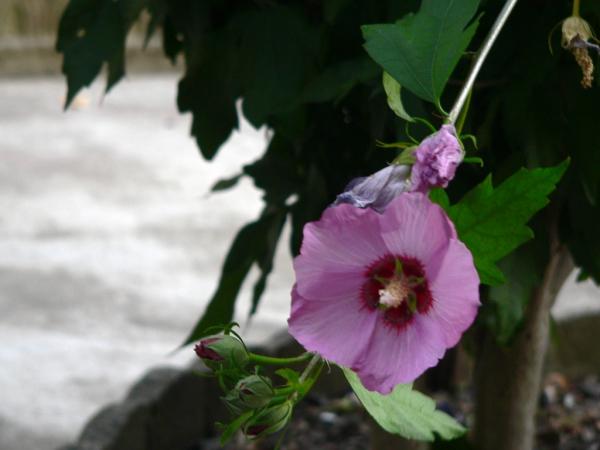 Dans mon jardin....