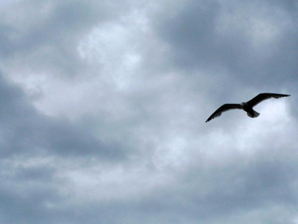 Vol au-dessus de Deauville...