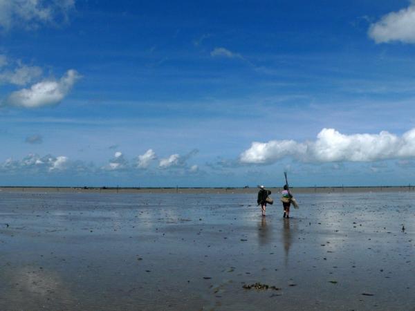 Pêche à la crevette- Seuls dans la Baie du Mt-St-Michel.