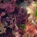 Algues colorées...