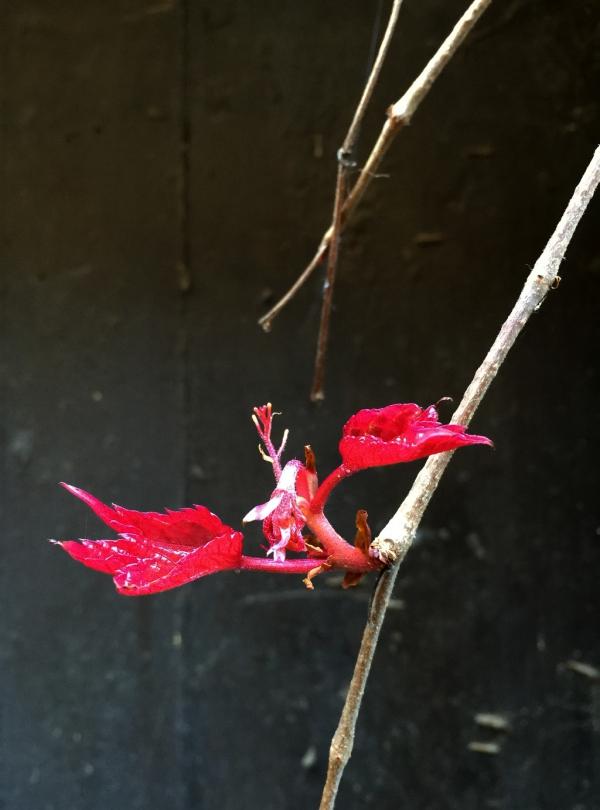 Couleurs du printemps