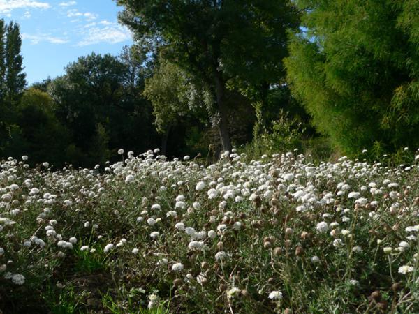 Le Jardin Camifolia à Chemillé (49)