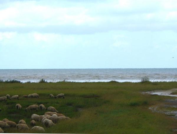 La Baie et ses moutons