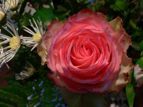 Morceau de bouquet