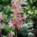 Orchidées du Sénat
