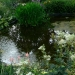La mare au jardin